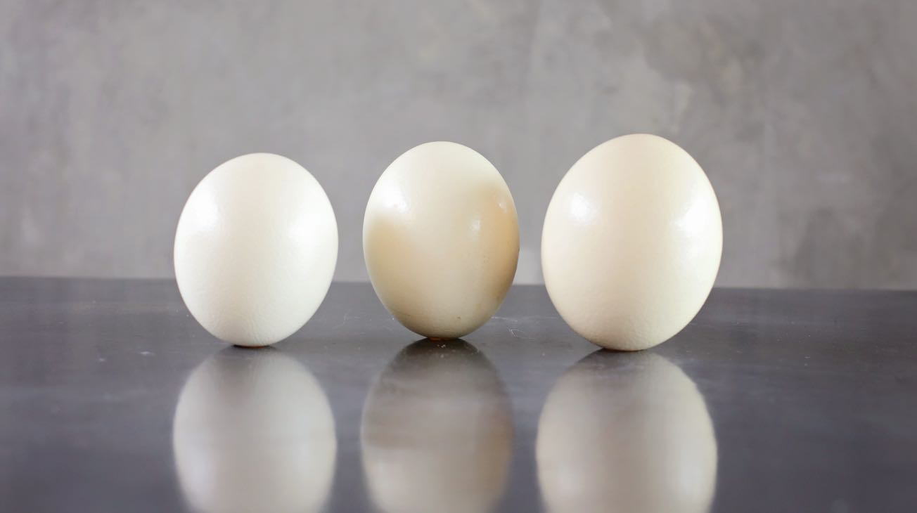 product-ostrich-eggs