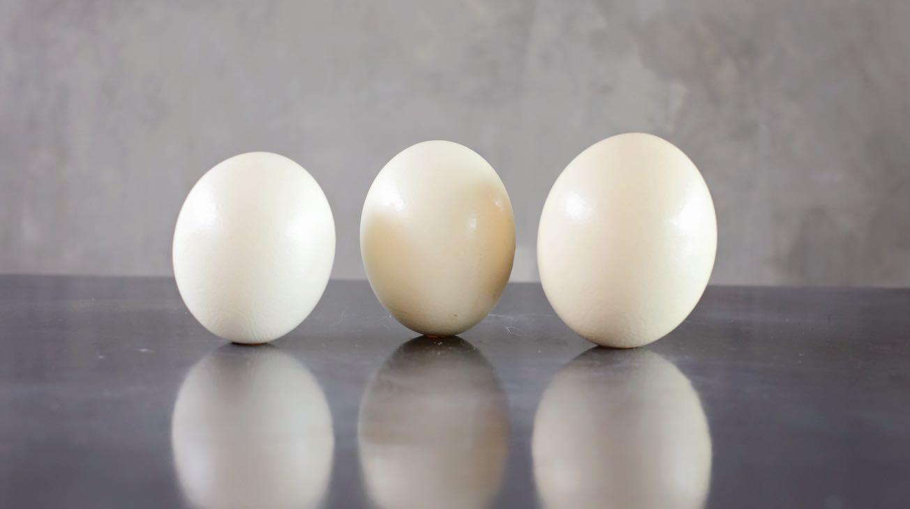 Hire White Ostrich Eggs Luxury Decor